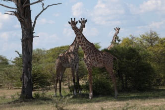 Selous Game Reserve, Oct 2013
